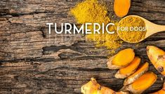 See the Turmeric is how much beneficial for dog's health life. Asian Plants, R Dogs, Turmeric, Health Benefits, Sweet Potato, Spices, Vegetables, Pets, Life