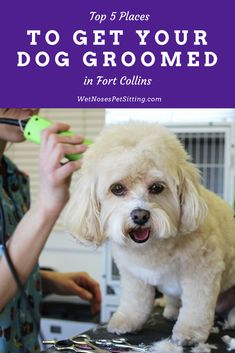 Places to go with your dog in fort collins wet noses do you have a dog that needs regularly grooming or maybe your pup just needs solutioingenieria Choice Image