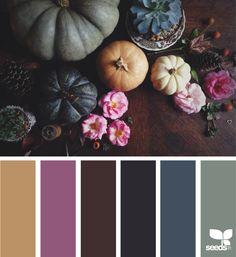 {autumn hues} image via: @kellyish
