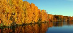 Rovaniemi is an urban outpost amidst wild nature, where age-old traditions meet modern life. The capital of Lapland is the perfect place for a holiday. Norway Sweden Finland, Lapland Finland, Bolivia City, Autumn Leaf Color, Polar Night, Tourist Information, Arctic Circle, Wild Nature, Lofoten