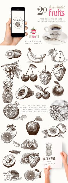 ORGANIC LOGO ELEMENTS – FRUITS by Friendly Label on @creativemarket organic logo hand-drawn hand-sketched handdrawn apple banana raspberry orange lemon blueberry avocado cherry grapes kiwi papaya peach pear pineapple pomegranate plum strawberry star fruit natural bio