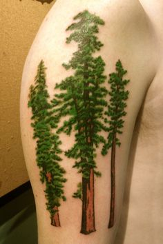 Redwood Tree Tattoo