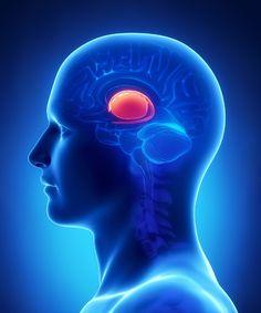 MIT:n tutkijat alkoivat 1990-luvulla tutkia tapoja. Tutkimus kohdistui yhteen aivojemme vanhimmista osista, tyvitumakkeeseen.