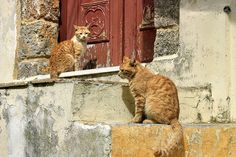 Two cats sitting on decayed steps. Old town. Rodos island. Dodecanese, Greece