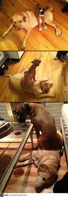 Some things never change (boxer)