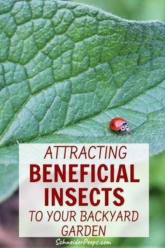 There are many beneficial insects and wildlife that you really want in the vegetable garden. But you have to invite them. Learn how to build frog and toad habitats, native bee hotels, butterfly houses, and more in this guide to organic gardening. #GrowingFood #SimpleLiving #Homesteading #Bees Beneficial Insects, Organic Gardening, Gardening Tips, Bee Hotels, Frog Habitat, Toad House, Vegetable Garden, Backyard Layout, Simple Living