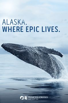 Alaska is nature on an epic scale. Experience the best of this wild frontier with Princess Cruises. Choose from a variety of ways to see the Great Land—including our to voyages. Start planning the cruise of a lifetime today. Alaska Travel, Travel Usa, Places To Travel, Places To See, Glacier Bay Alaska, Skagway Alaska, Alaskan Cruise, Living In Alaska, Cruise Destinations