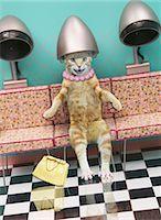 Cat sitting under beauty salon hair dryer