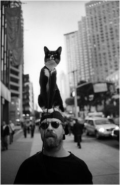 Cat as a hat.