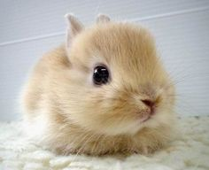 Cute fluffy baby kittens   Rabbit- Free animals   dogs   cats   picture and information