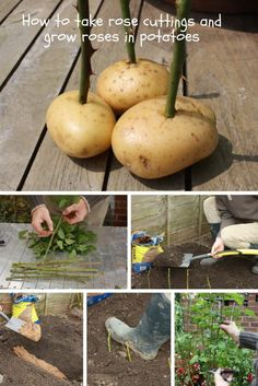 Proper gardening will save you a lot of time and money. Take a look at 27+ creative gardening hacks below and apply them to your garden.