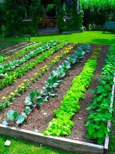All kinds of great vegetable garden information.