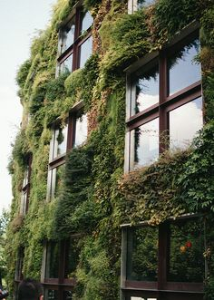 Mossy Building