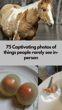 75 Captivating photos of things people rarely see in-person Diy Crafts To Sell, Diy Crafts For Kids, Home Crafts, Diy Home Decor, Hydrangea Care, Usa Tumblr, Good Jokes, Woodworking Crafts, Woodworking Shop