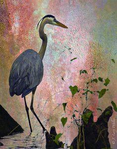 Great Blue Heron Among Cypress Knees Digital Art by J Larry Walker