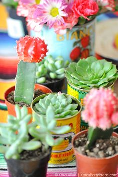 Love all the succulents and cactus! Cinco De Mayo Mexican Fiesta by Kara Allen… Frida Kahlo Party Decoration, Mexican Fiesta Party, Mexican Fiesta Decorations, Mexican Desserts, Mexican Birthday, Taco Party, Cactus Y Suculentas, Party Time, Party Ideas