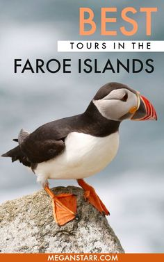 Faroe Islands Tours and Excursions: From Seeing the Puffins on Mykines to the Bird Cliffs in Vestmanna and Beyond! Northern Island, Overseas Travel, Island Tour, Desert Island, Europe Travel Guide, Winter Travel, Best Vacations, Cool Places To Visit, Trip Planning