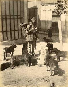 Abdullah Frères Les chiens errants de Constantinople, Turquie, tirage albuminé,
