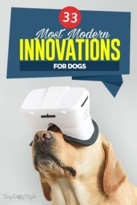 The pet supplies market is constantly evolving, regularly bring new technologies. Here are 33 modern innovations for dogs and dog owners that you'll want. Dog Gadgets, High Tech Gadgets, Unicorn Dog Costume, Pet Camera, Puppy Supplies, Cool Dog Houses, Horses And Dogs, Different Dogs, Pet Life
