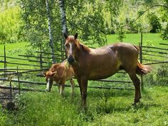 Horses Equines and human beings secure an early connection. Asian wanderers most likely domiciliated the first horses some 4000 years…