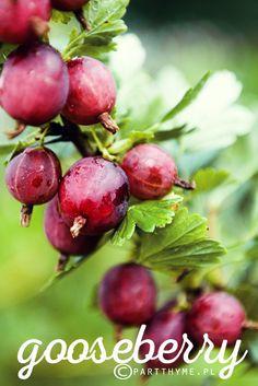 czerwony #agrest / red #gooseberry in my #garden  - przepis na dżem z agrestu