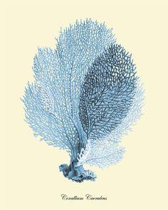 Coral art print Vintage prints old prints by VictorianWallArt, $10.00
