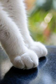 fancy feet | Flickr: partage de photos!
