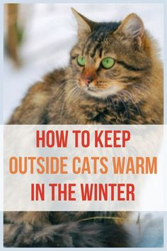 How to keep outside cats warm during the winter without electricity! Great info for homesteading beginners Outside Cat Shelter, Cats Outside, Cat Shelters For Winter, Raising Backyard Chickens, Warm Bed, Kitten Care, Cat Care Tips, Warm In The Winter, Outdoor Cats