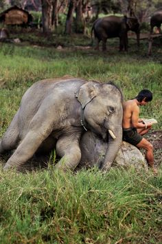 Bedtime story..............By Steve McCurry We need to give them back their future. When you like, follow or share IvoryForElephants... on FB, Twitter, Instagram we gain media $$$. #ivoryforelephants #stoppoaching #elephants for #ivory ! #animals #babyelephants #animalbabies #killthetrade