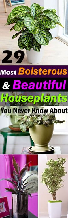 The houseplants in this list are special, they are bold and pretty. Some of the most unique, beautiful indoor plants you should grow!