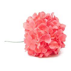 Hortensia de flamenca en color coral.