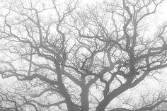 finienfotodesign - Fotokünstlerin Verena Maria - » verenas fotografische traumreisen - Schatten in der Nebelwelt #natur #nature #wasser #water # Entspannung #finienfotodesign #verenamaria #stille #silence #portfolio #fotografie #photography #art #nebel #kassel #fog