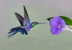 Love humingbird #Lovelife