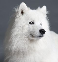 177 best Dogs, Dogs, D...