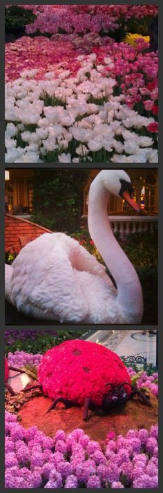 Botanical Gardens at the Bellagio {Beaux & Belles blog}