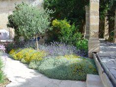santolina, lavender, tulbaghia, westringia, phoenix, roebellenii, olive, lantana, citrus, strelitzia, agapanthus