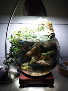 The Filterless Tank Picture Thread - Page 3 - The Planted Tank Forum