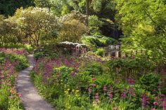 Learn all about RHS Partner Gardens. Visit the beautiful RHS gardens throughout the UK for fun days out for all the family. Free to all RHS members. Purple Perennials, Harewood House, Fun Days Out, West Yorkshire, Heaven On Earth, Himalayan, My Dream Home, Google Images, Home And Garden