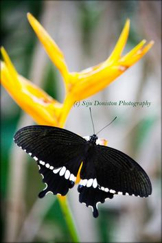 "500px / Photo ""butterfly"" by Siju Doniston"