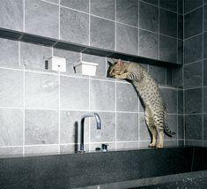 Bathroom, Bathtub