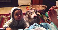 Dog Says �Mama� When Baby Can�t, All For A Bite Of Food via LittleThings.com
