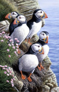 <3 <3 By, Jeremy Paul..these Puffin's are so realistically depicted. <3 <3