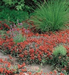 10 Best Alpine Plants For Chalk Images Alpine Plants Beautiful
