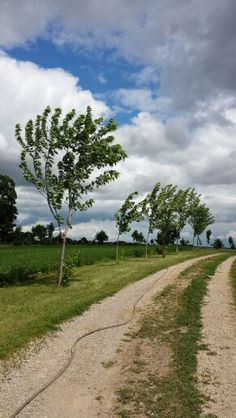 Beautiful clouds on a breezy day.  At the back of the farm.