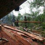 Aktivis Tolak Pembukaan Hutan Lindung untuk Pembangunan
