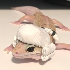 All you need in life lol. Leopard Gecko Cute, Cute Gecko, Cute Little Animals, Cute Funny Animals, Aggressive Animals, Cute Lizard, Cute Reptiles, Lovely Creatures, Geckos