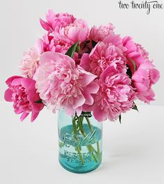 If you hate photos of peonies, or flowers in general, you should probably just exit out of your browser now. Or check out some of my other non-peony posts to entertain yourself. Or read about how to grow these beauties in your yard. Whatever you want to do.