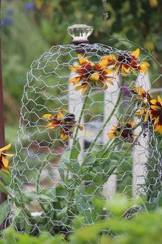 Garden Deco, Edible Garden, Vegetable Garden, Garden Plants, Potager Garden, Backyard Projects, Garden Projects, Deer Proof Plants, Garden Cloche