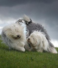 The daily photos range from silly to scenic, with the dogs' owners making use of their village's beautiful landscapes.