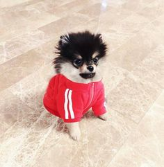 Tan ah ~ ❤️ pin callmechin Bts Dogs, Baby Animals, Cute Animals, Gaspard, Kpop, K Idol, V Taehyung, Bulletproof Boy Scouts, Bts Group